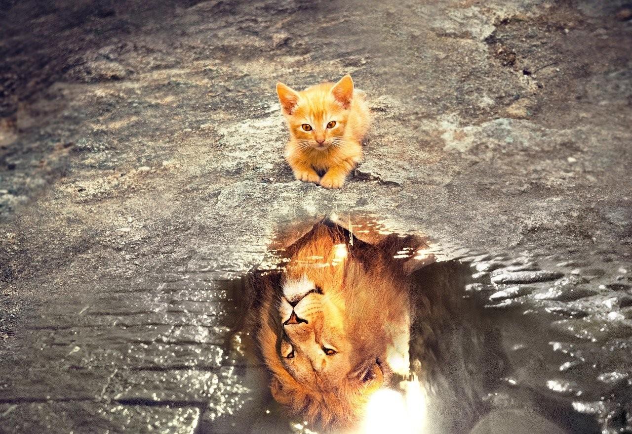Bogáti Péter: Az oroszlán is macska