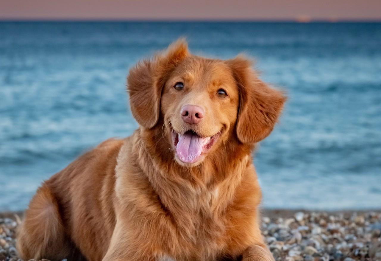 Hogyan tanítsd meg a kutyádat úszni?