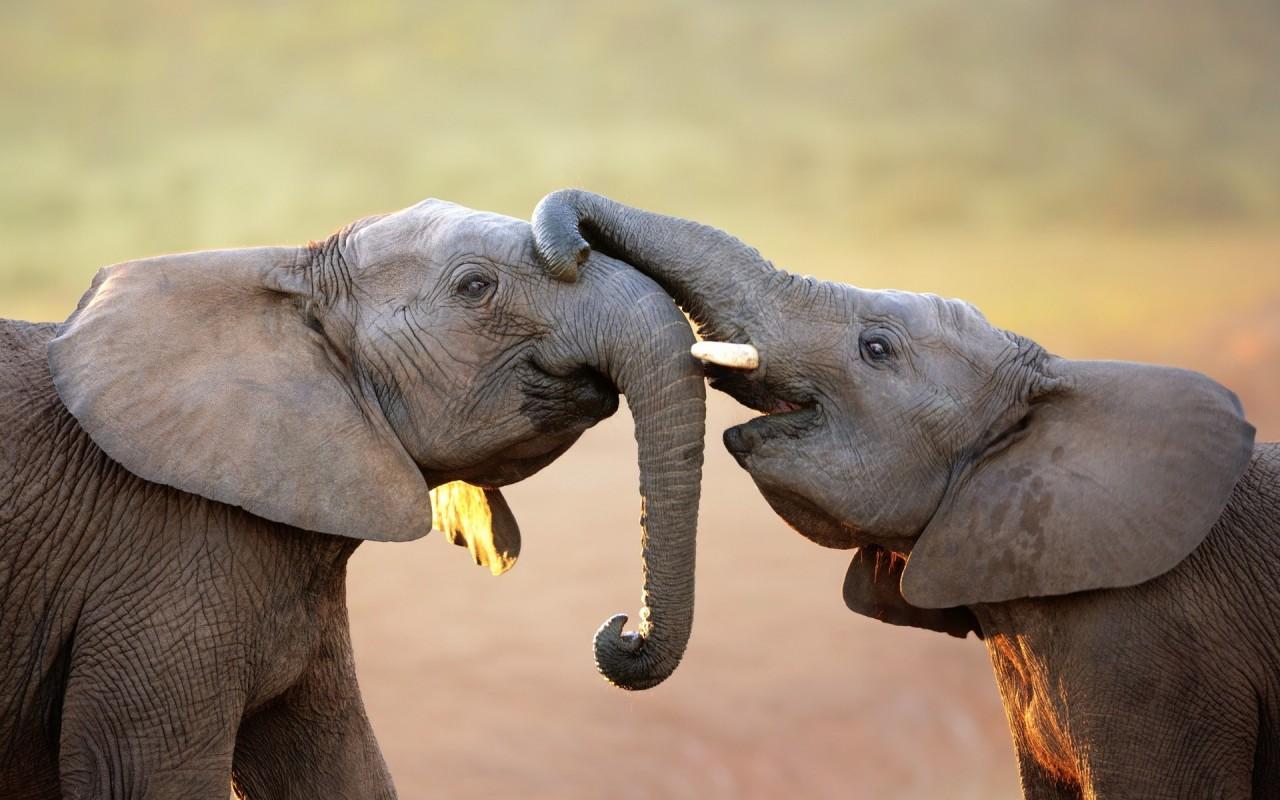 Rajzoló elefántok