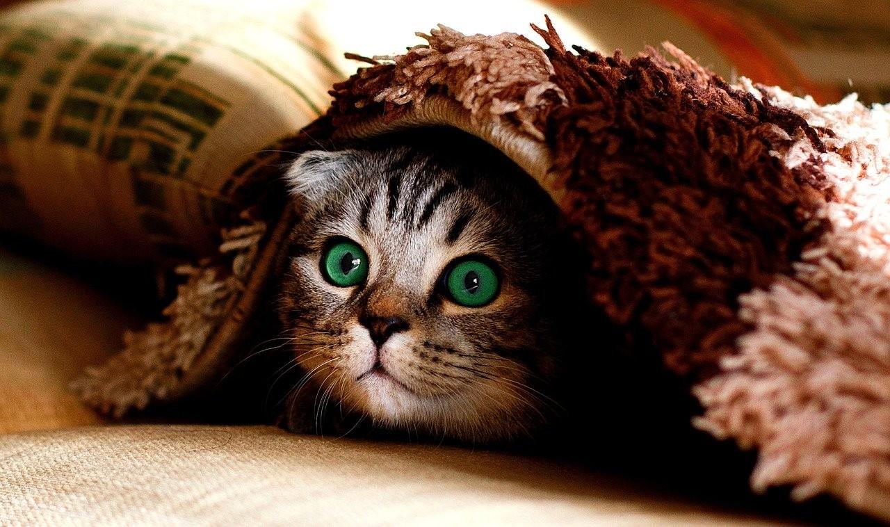Védelmező cicák