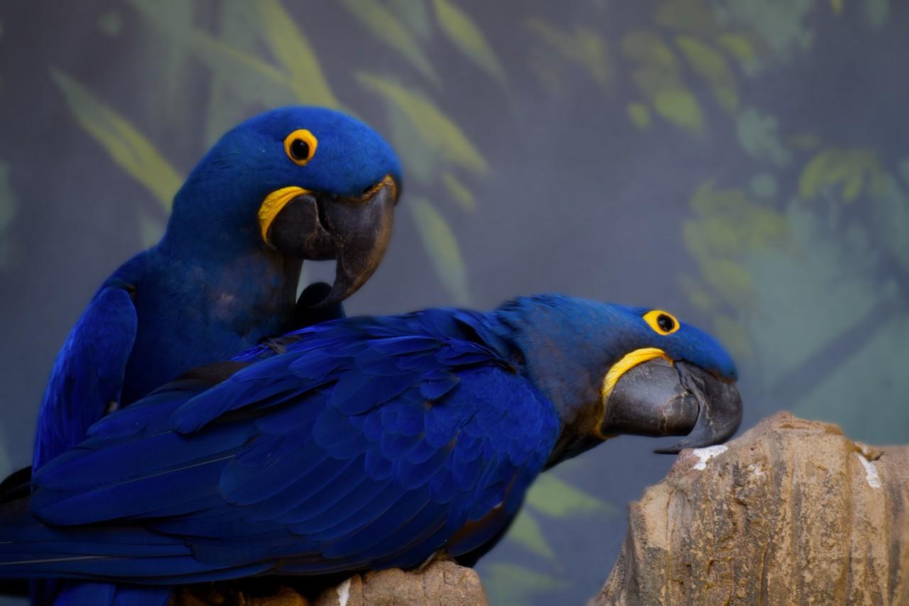 Shuka Vana, az indiai madárparadicsom
